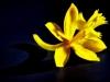 Yellow (1 of 1)-2